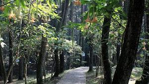Bercinta dengan Alam di Taman Hutan Raya Sultan Syarif Kasim Provinsi Riau