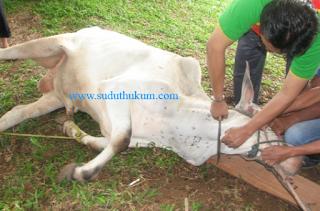 Hewan yang Halal Disembelih
