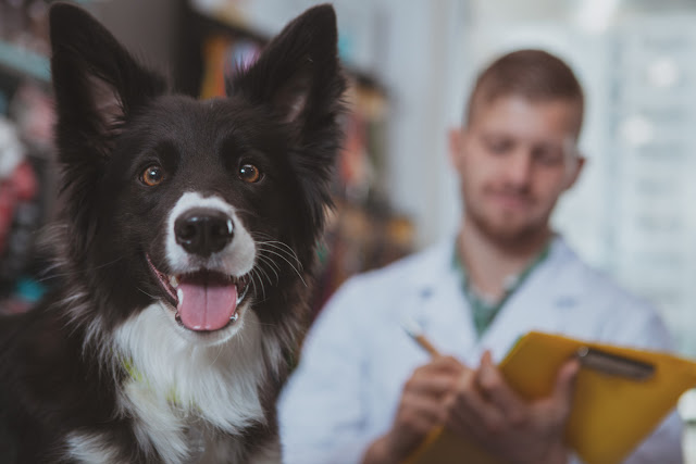 Study Shows Importance of Behavioural Services in Veterinary Medicine; happy dog at vet