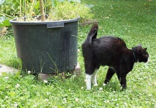Perdebatan Seputar Air Kencing Kucing, Benarkah Hukumnya Najis?