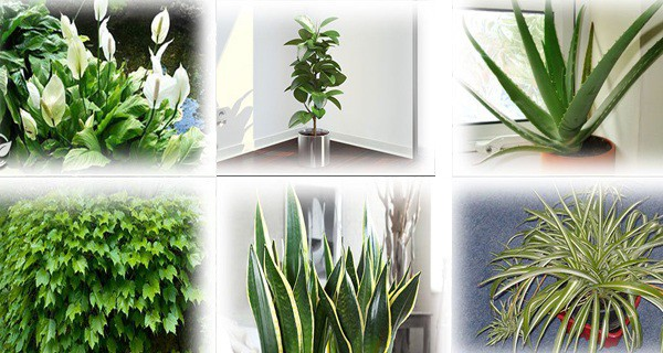 Find Out How Keeping These Plants in Your Home Can Make You Healthier!