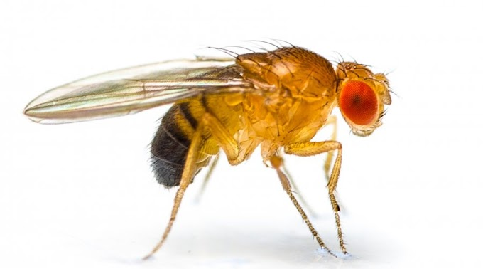 How To Eradicate Fruit Flies In The Kitchen