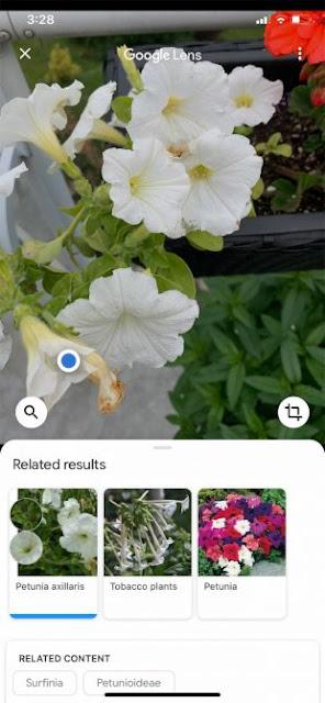 2) تطبيق Google Lens