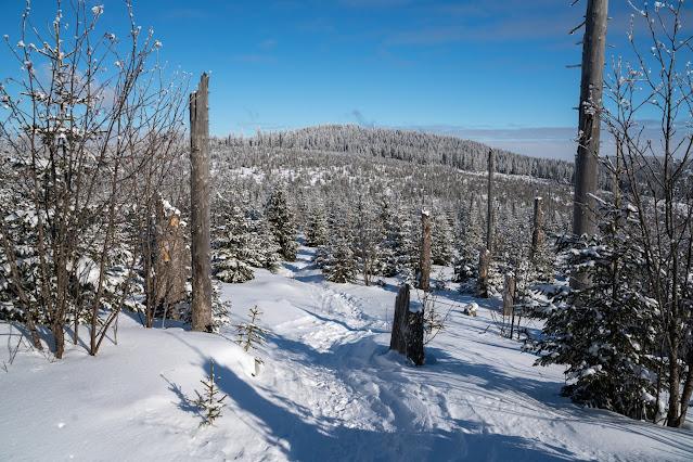 Winterwandern Mauth-Finsterau  Reschbachklause – Siebensteinkopf  Nationalpark Bayerischer Wald 15