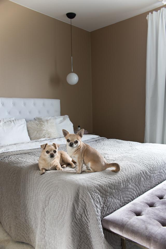 Villa H, makuuhuoneen sisustus, makuuhuone, pimennysverhot, chihuahua
