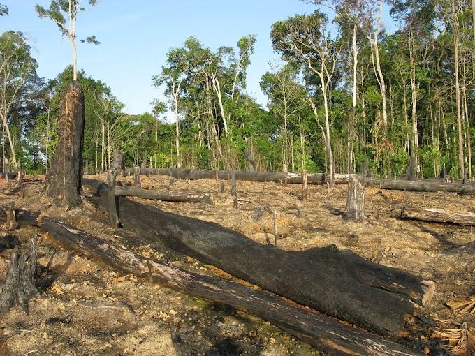 Meio Ambiente : Noruega e Alemanha defendem objetivos e governança do Fundo Amazônia