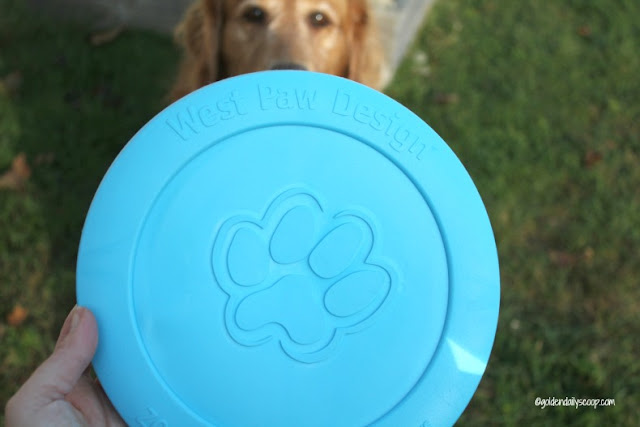durable dog toys for powerful chewers