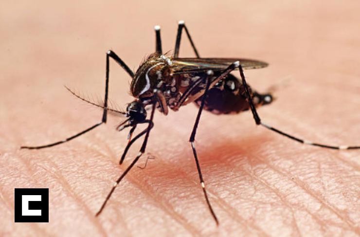 Dengue provoca alerta en 21 provincias de RD