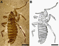 http://sciencythoughts.blogspot.co.uk/2016/01/fossil-fleas-from-mesozoic-are-they-or.html