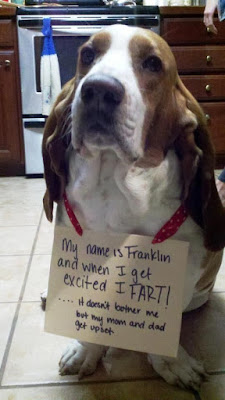 Funny Dog Shaming Pictures On Pinterest