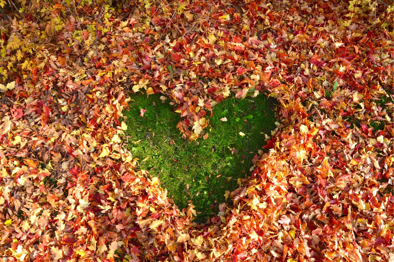 varikkaat lehdet-sydan