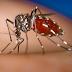 Mais três casos de chikungunya são confirmados em São Luiz Gonzaga