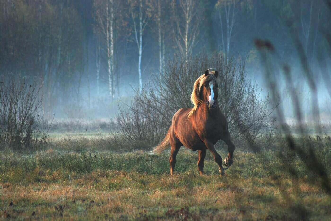 horse running in misty field - 7 ways to memorialize your equine friend