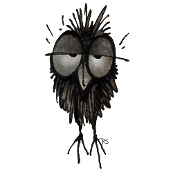 funny owl, owls