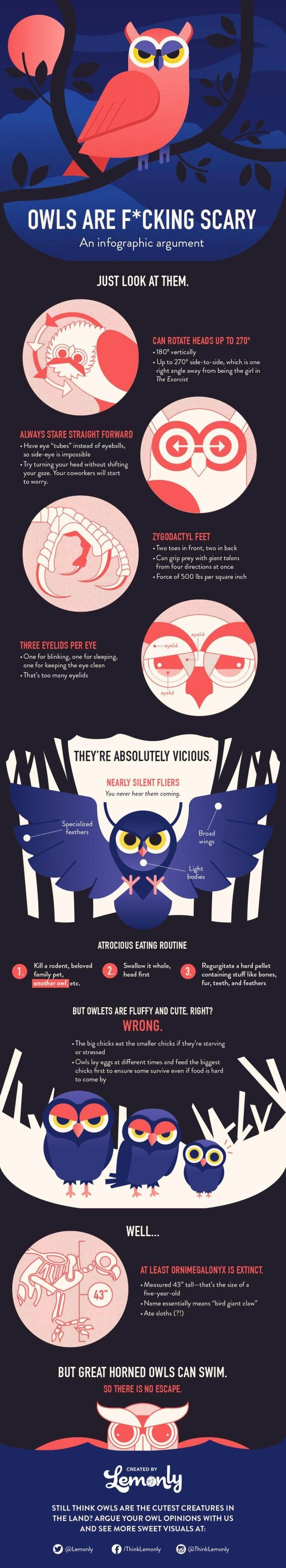 OWLS are scary an argument #infographic