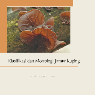 Klasifikasi Jamur Kuping dan Morfologi Jamur Kuping