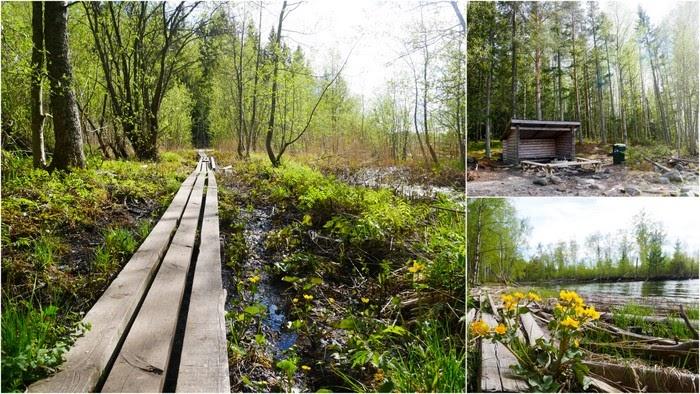 Alneskogens naturreservat