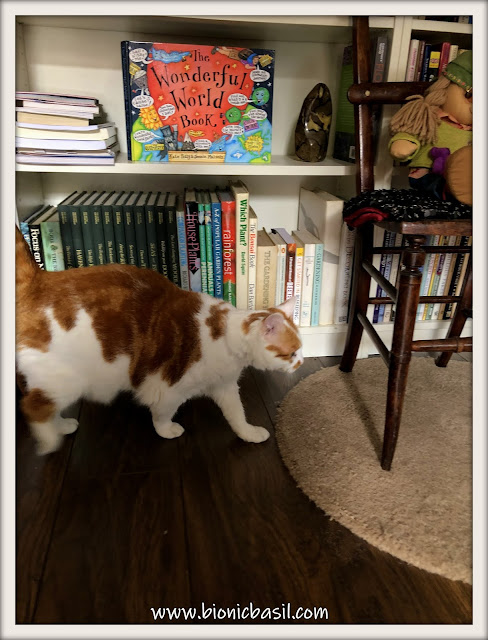 Book Reviews with Amber  #148 ©BionicBasil® In The Library