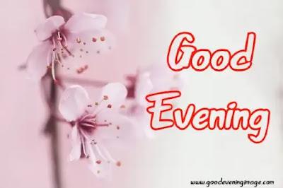 Good Evening Rose Image Download