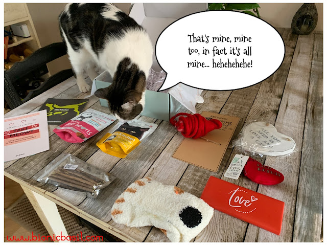 What's In The Box ©BionicBasil® Gus & Bella Take Meowt Valentine's Box - Melvyn claims it all