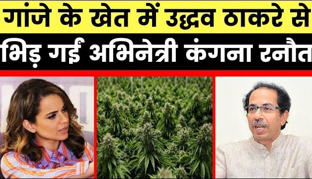 Kangana-furious-over-Uddhav-Thackeray-hemp-farming-comment
