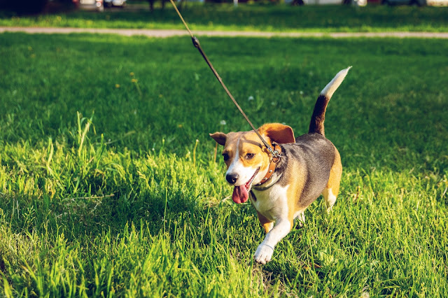 How To Make Money Fast As A Kid - Pet Sitting