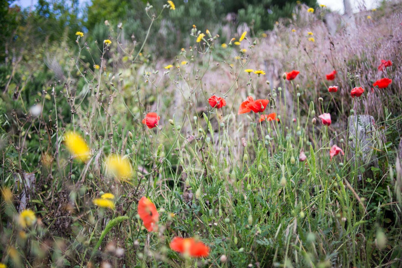 mini garden, outdoor spaces, courtyard, garden furniture, wild flowers