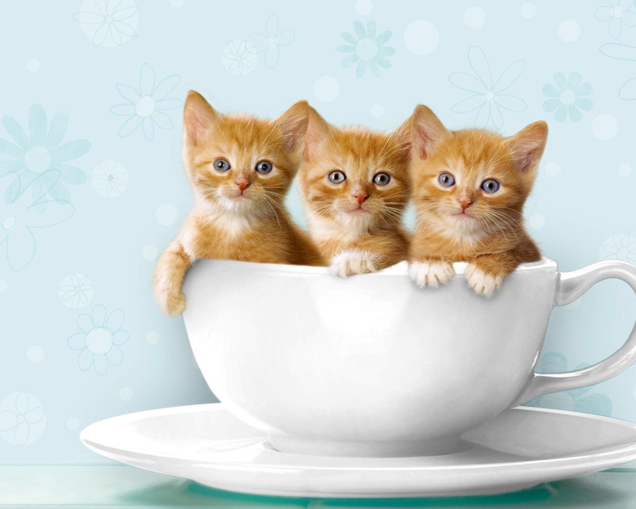 Nhà có 3 anh em, nhìn 3 chú mèo thật sự rất đáng yêu,bức ảnh thật đẹp mắt khi 3 chú mèo được nằm gọn trong một chiếc tách uống nước và ...