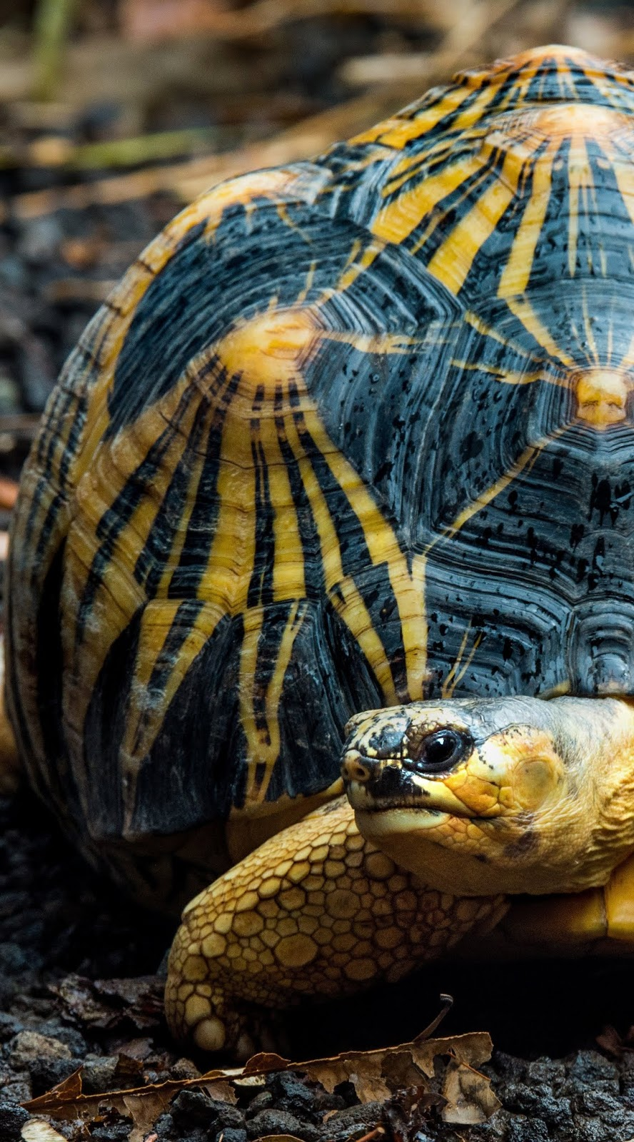 Photo of a tortoise.
