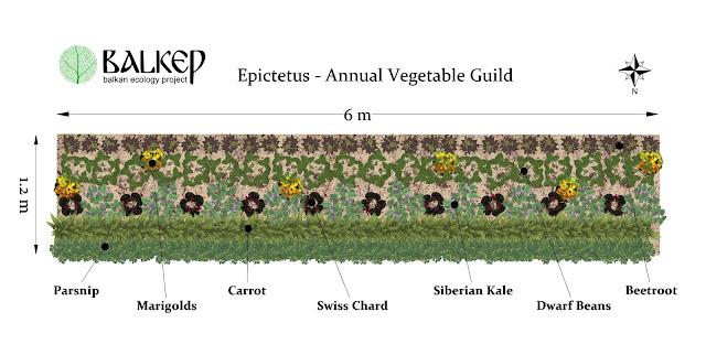Epictetus%2Bplanting%2Bscheme.jpg