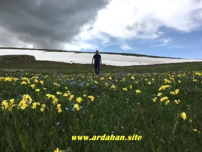 Ardahanda Kar ve çiçekler bir arada