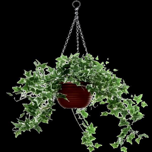 plantascolgantespngcutautrenderstuberecursosarquitectura - Plantas Colgantes
