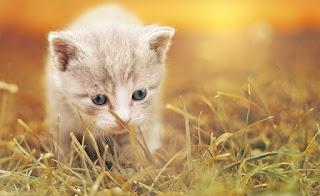 Cara Memanggil Kucing Agar Nurut Langsung Mendekat