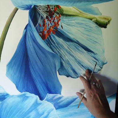Meconopsis botanical painting