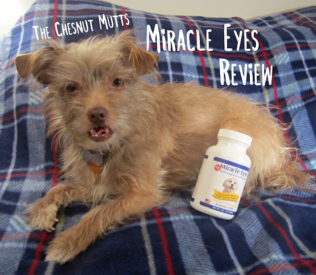The Chesnut Mutts Review : Miracle Eyes