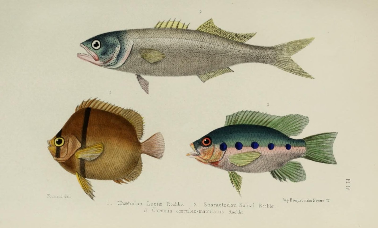 Peixes | Vertebrados