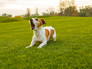 Why Are Some Dogs More Aggressive?