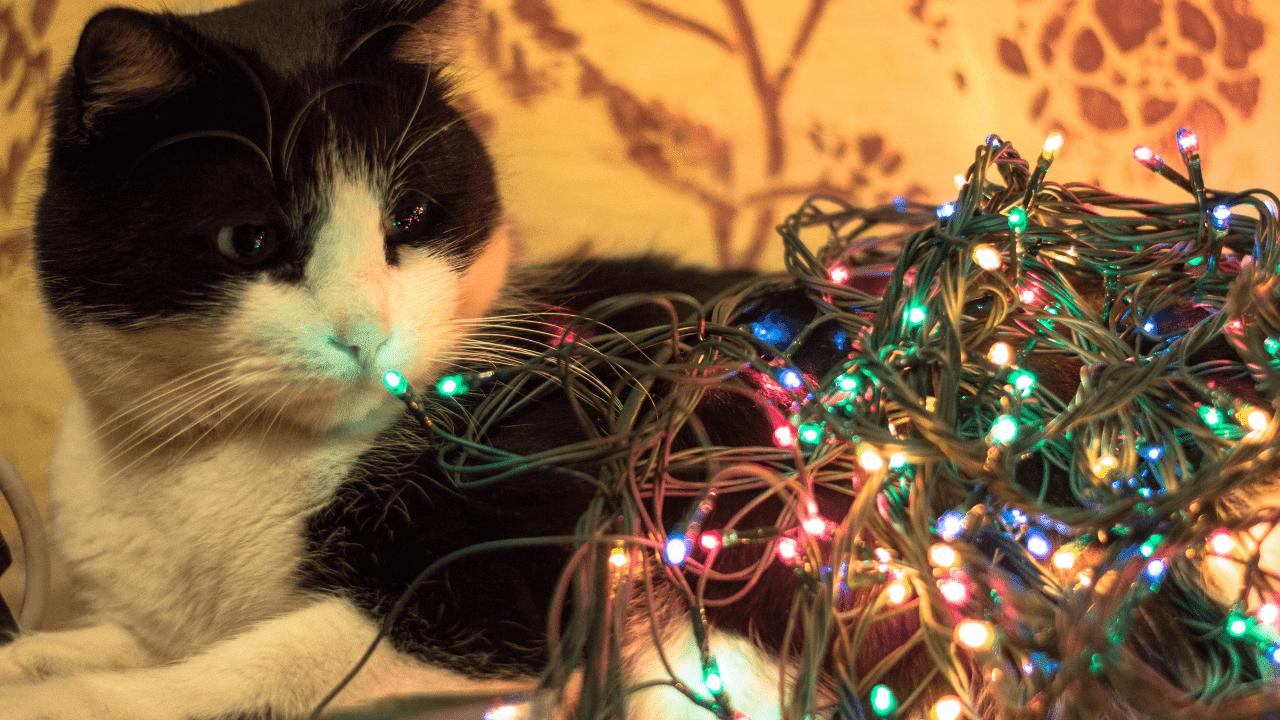 gato en navidad viendo las lucers