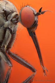 Fever from Dengue Virus Infection