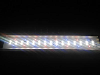 GEXパワーIII全LED点灯