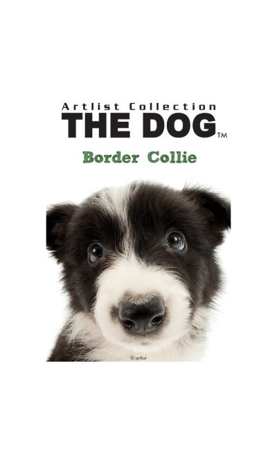 THE DOG Border Collie