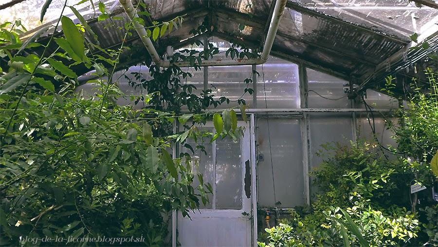 Botanická záhrada, Košice