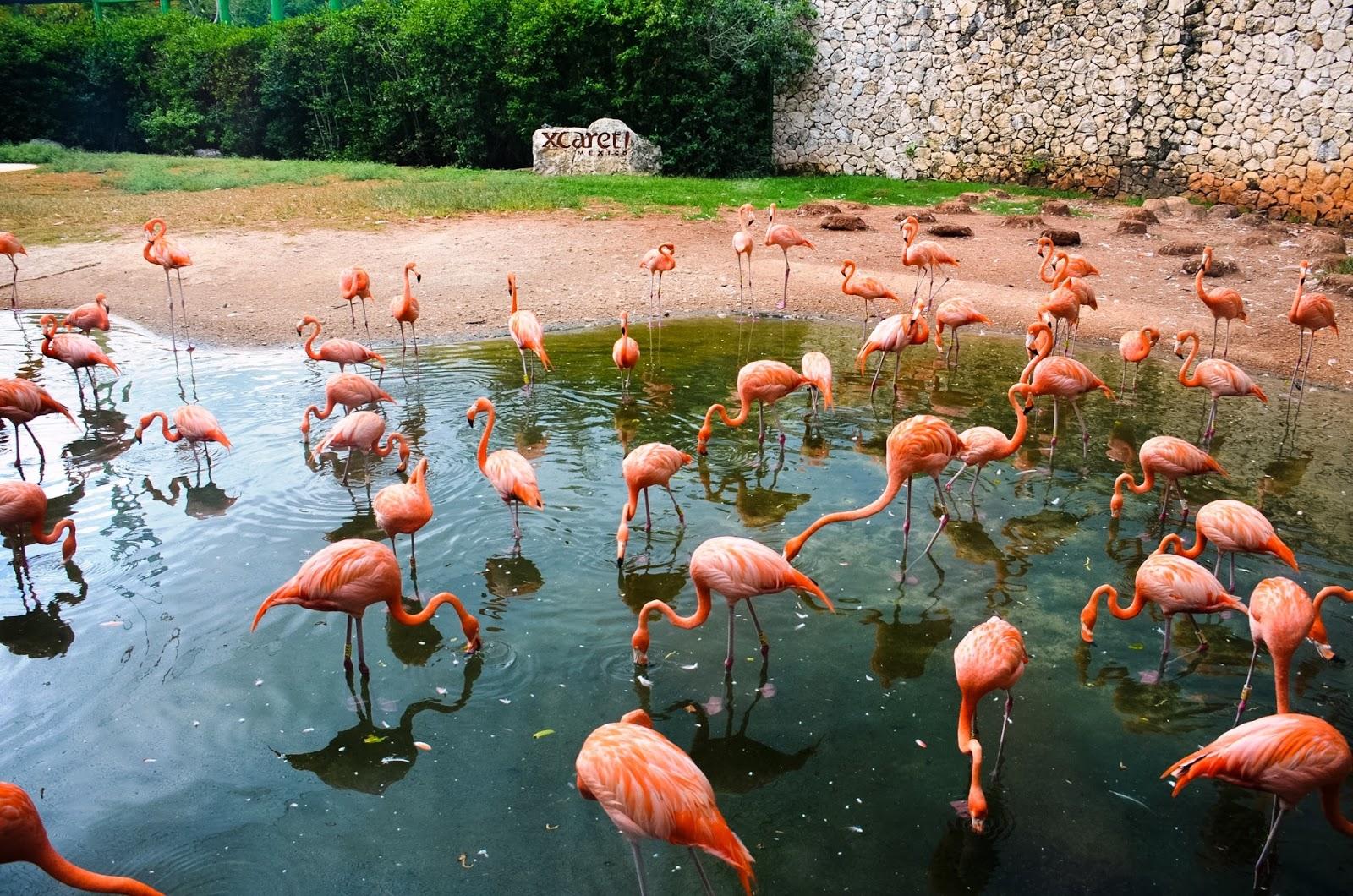 xcaret flamingo sanctuary
