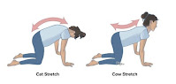 Ways to Get Rid of Your All Body and Acute Low Back Pain Instantly-illustration-cat-cow-yoga-pose-lower-back-pain-image