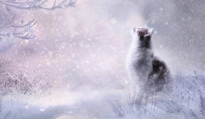 Papel de Parede Gato na Neve