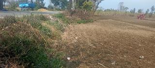 सड़क की जगह को जोतकर उगाई जा रही फसल