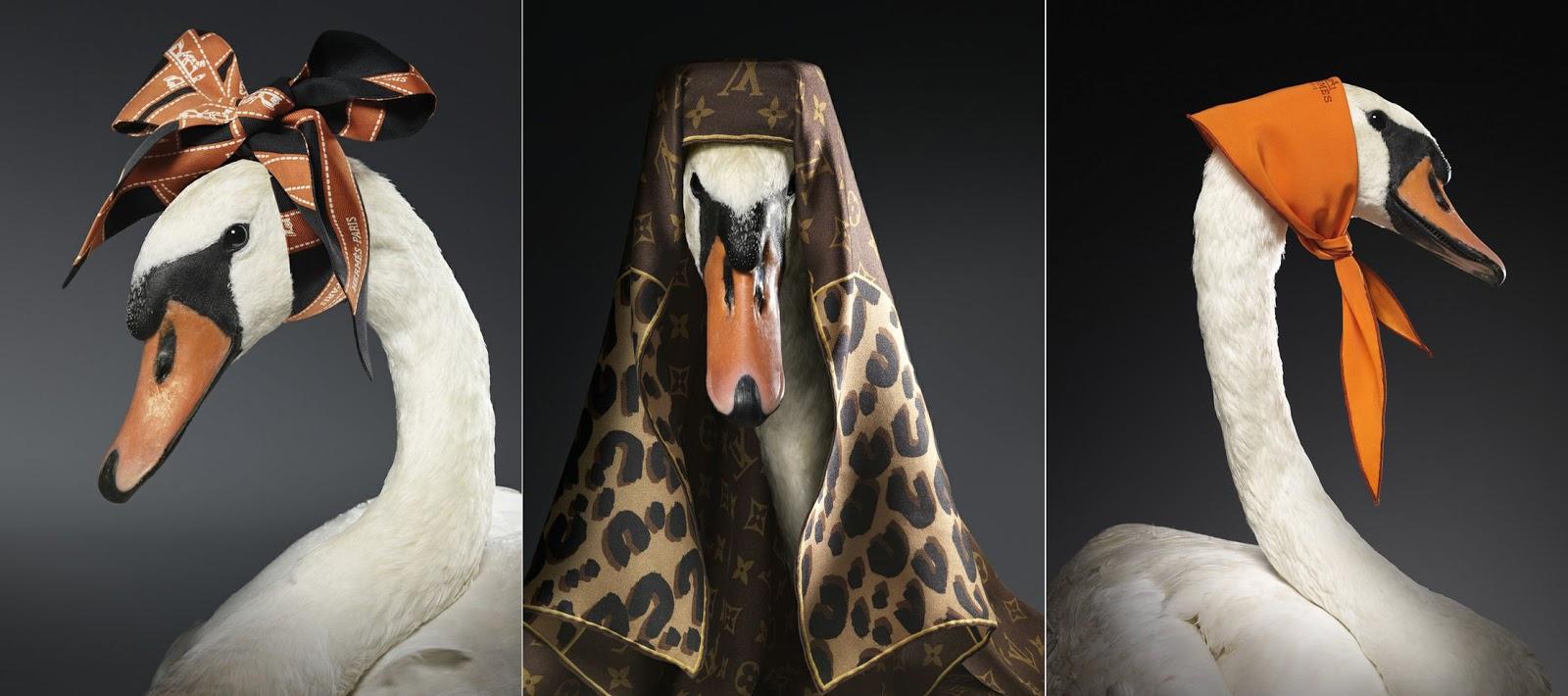 модная одежда, korean fashion, основы корейской моды, корейская мода, корейские бренды, swan, лебедь, грациозность, Ermanno Scervino, Armin Zogbaum