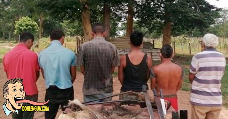 Seis detenidos por matar a un Oso Hormiguero para comérselo en Maracaibo