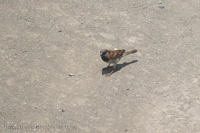 Eco tourism in India - Elephanta Caves - sparrows