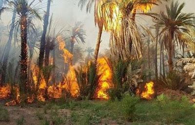 عاجل: حريق بواحة للنخيل بضواحي إقليم طاطا تخلف خسائر مادية جسيمة